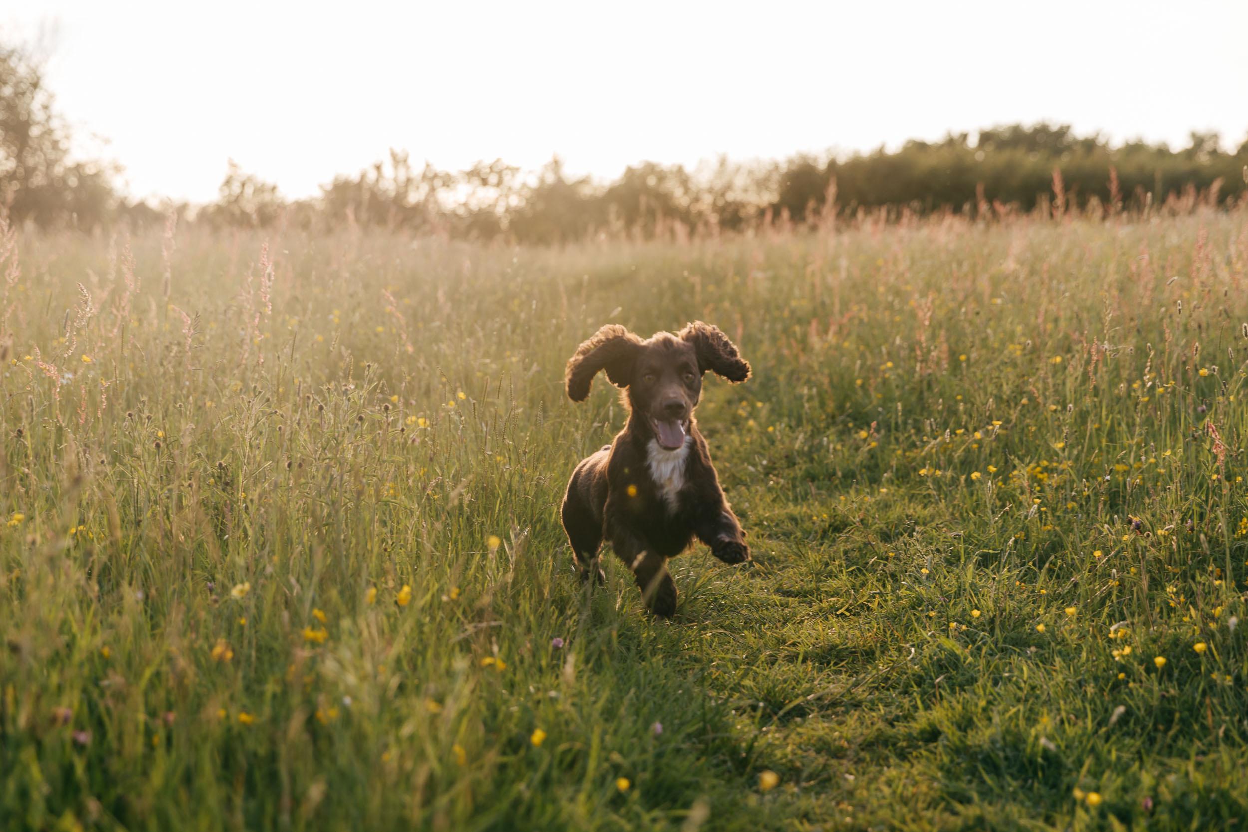 pet portrait photography gloucestershire