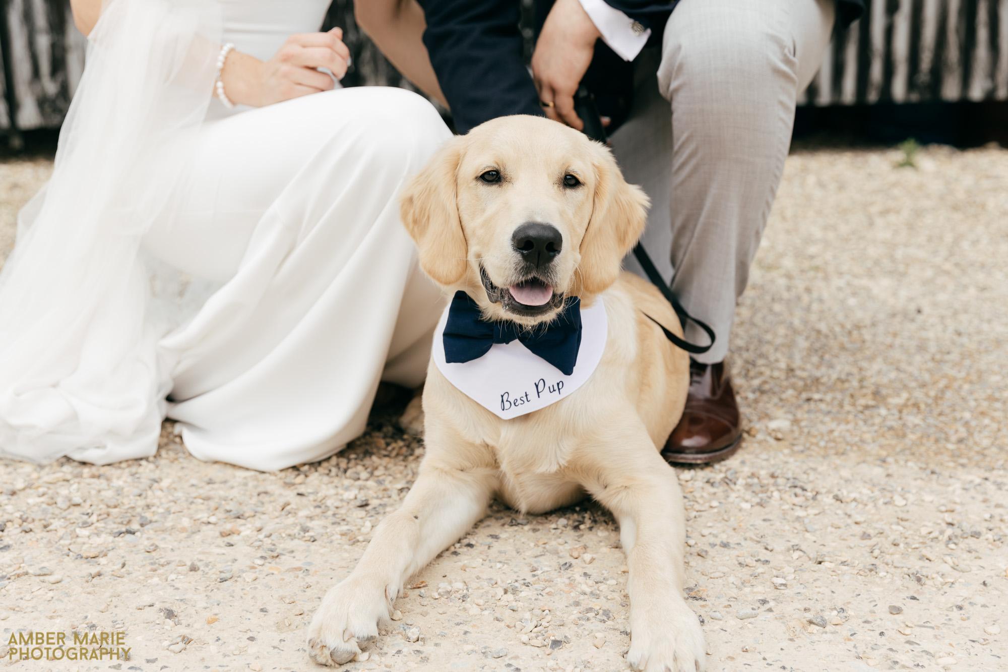 cotswolds wedding dog